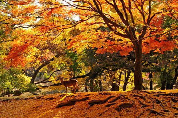 見どころ 奈良 公園