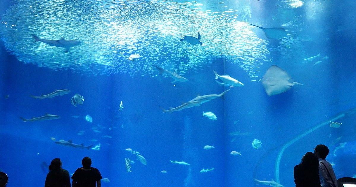 茨城 大洗 水族館