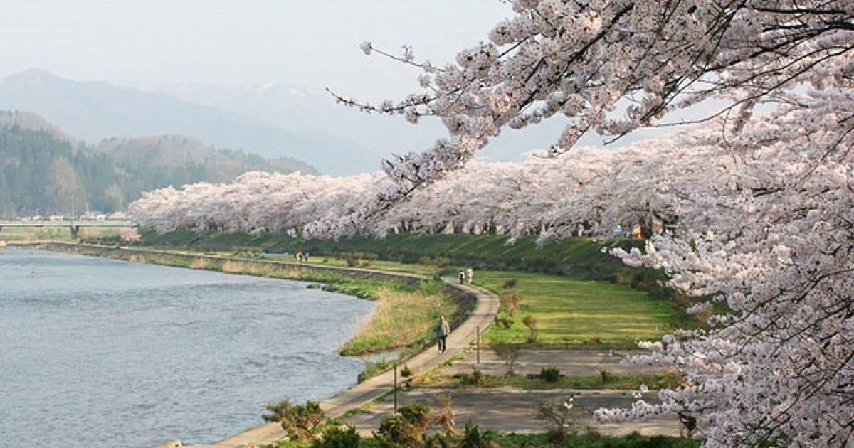 「角館 桜まつり」の画像検索結果