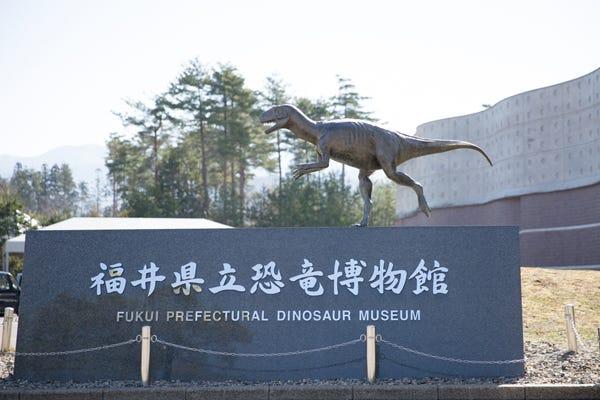 恐竜 博物館