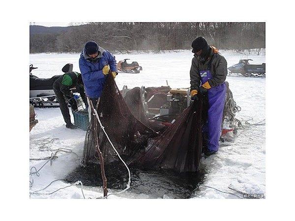 網走湖わかさぎ氷下曳き網漁見学体験│観光・旅行ガイド - ぐるたび