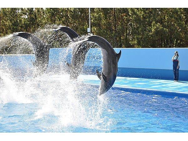 新潟市水族館マリンピア日本海│観光・旅行ガイド - ぐるたび