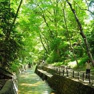 水と緑豊かな等々力渓谷で癒しのひととき