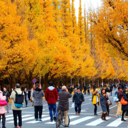 Autumn in Tokyo 2020: 16 Best Places for Fall Foliage in Tokyo