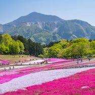 羊山公園・芝桜の丘の芝桜を徹底紹介! 人気の絶景を見に行こう