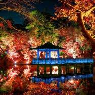 東京夜楓景點5選:最佳觀賞期、點燈時間、周邊推薦住宿,通通報你知!