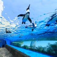 Sunshine City in Tokyo's Ikebukuro: Deep Dive into Popular Spots for Dates, Family Fun & More!