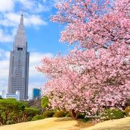 Tokyo's Incredible Urban Oasis: Complete Guide to Shinjuku Gyoen