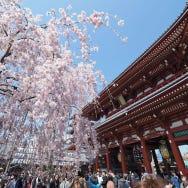 우에노, 아사쿠사가 한데 모인 관광 중심, 다이토의 봄 뻔한 일정에서 벗어나 나만의 당일치기 여행을 계획해 보세요
