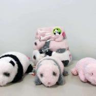 Ueno Zoo: 5 Unique Japanese Panda Goods You Won't Find Anywhere Else!