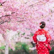 (2020 UPDATE) Spectacular Selection of 10 Sakura Viewing Spots in Tokyo