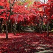 北海道の秋を彩る紅葉ガイド。人気スポットは?ベストシーズンは?