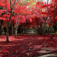 Complete Hokkaido Autumn Foliage Guide: 9 Best Places For Fall Leaves (And When To See Them)!