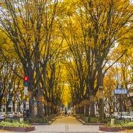 센다이의 가을철(9월・10월・11월) 날씨와 옷차림 가이드 [여행 전에 알아 두어야 할 Tip]