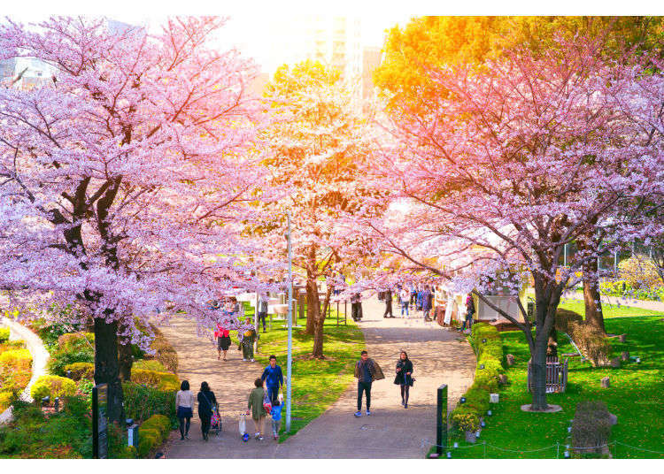 Sepuluh Tempat Terkenal Untuk Hanami Melihat Bunga Sakura Live Japan Jepang Perjalanan Dan Pariwisata Pemandu