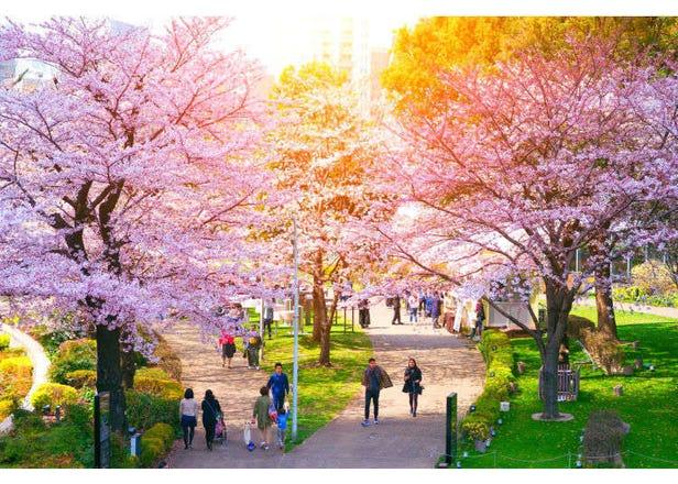 """10 tempat popular untuk """"hanami"""" (tradisi Jepun dalam menikmati keindahan bunga sakura)"""