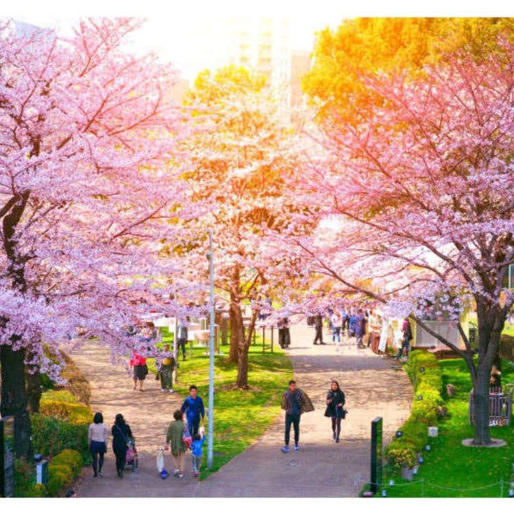 Seeing Sakura: 10 Best Spots for Cherry Blossoms in Tokyo 2020!