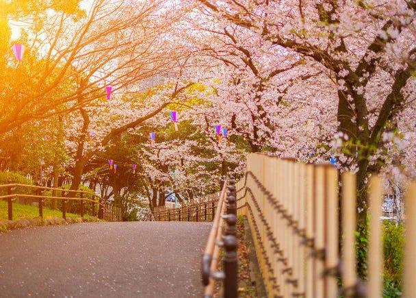 10. Asukayama Park