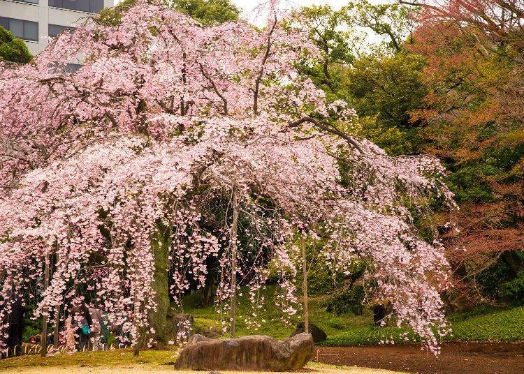 8. Koishikawa Korakuen Gardens