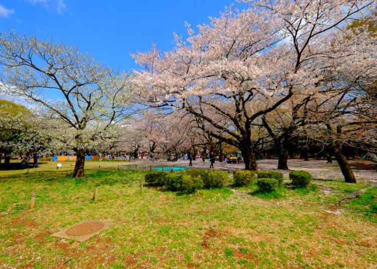 7. Yoyogi Park