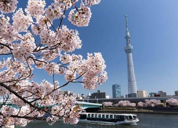 4. Sumida Park in Taito-ku