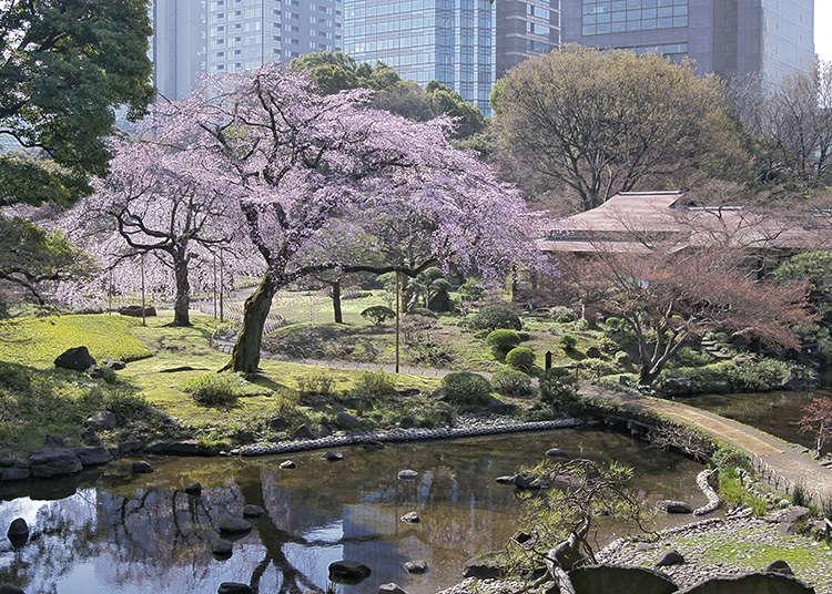 8:小石川後楽園