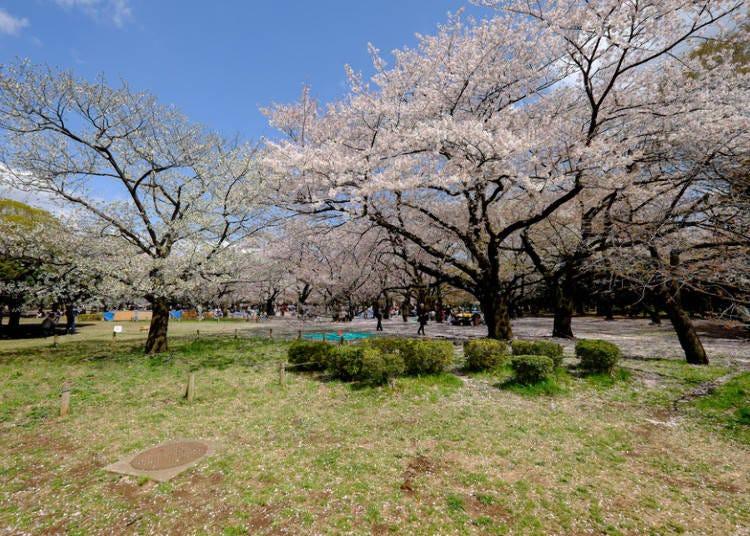 7:代々木公園