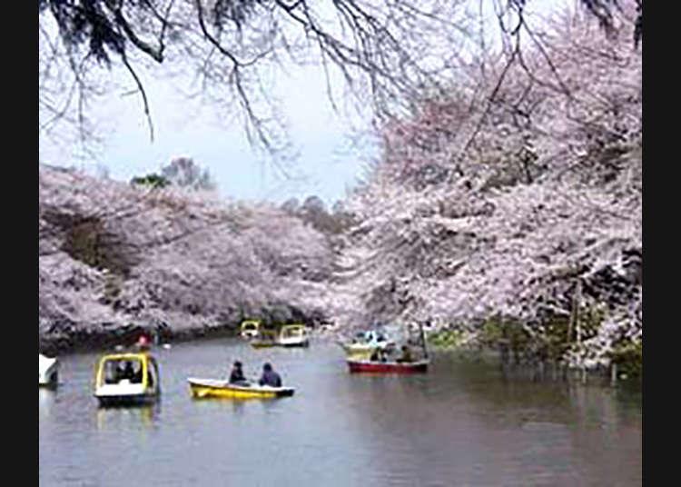 5. 이노카시라온시 공원(이노카시라 공원)