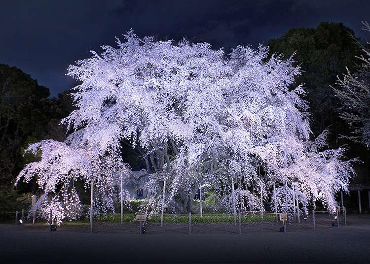 """9: """"Rikugien Gardens"""" (Taman Rikugi)"""