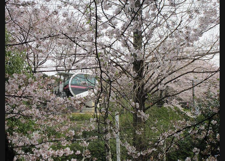 "10: ""Asukayama Park"" (Taman Asukayama)"