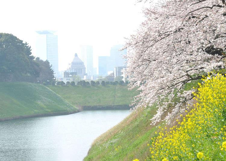 3. จิโดริกะฟุจิ (Chidorigafuji Park)