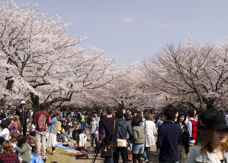 7:代代木公園