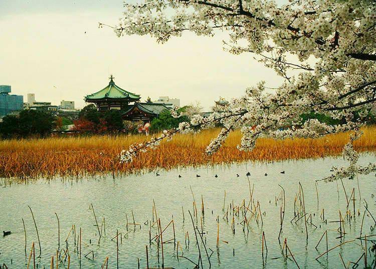 7. What is the island in Shinobazu Pond?