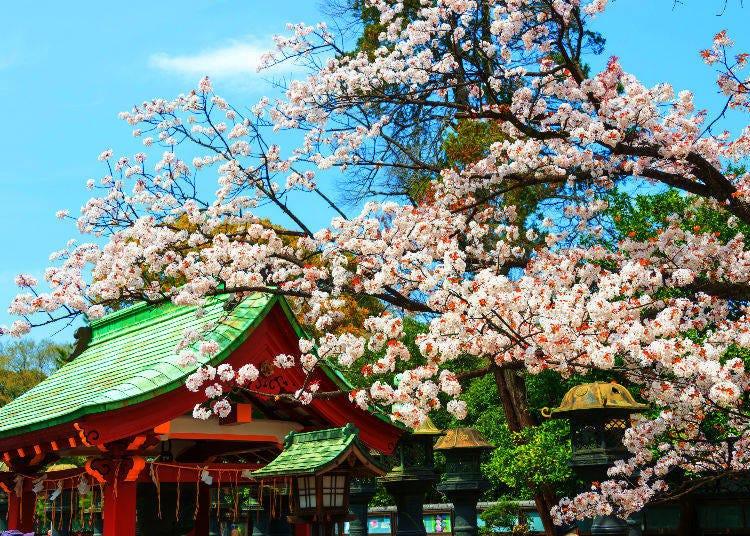 10. Why is a tanuki a deity?