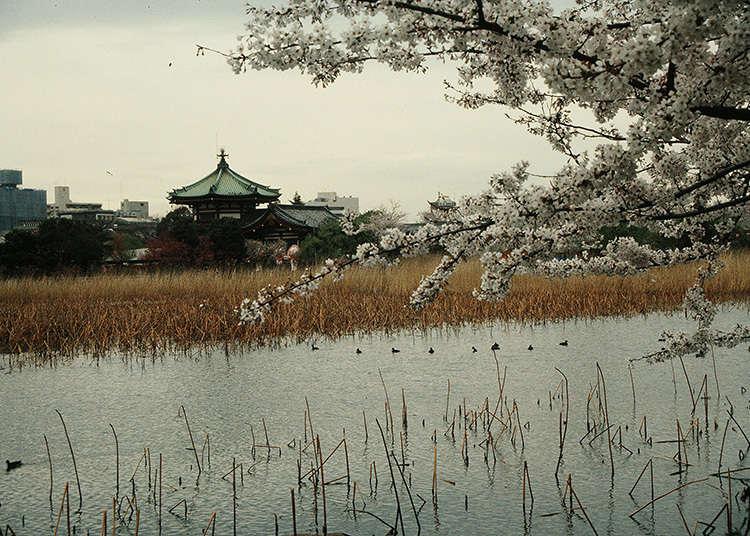Apakah itu pulau di Shinobazu-no-ike (Kolam Shinobazu)?