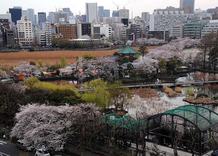 另外一個名字「上野之山」的由來?