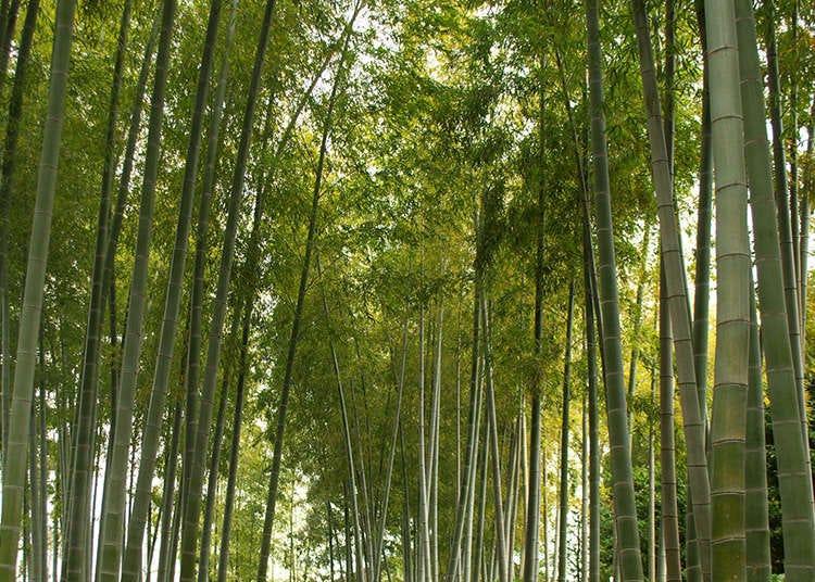 Lima Taman Jepang untuk Mengetahui Wabi-Sabi Jepang