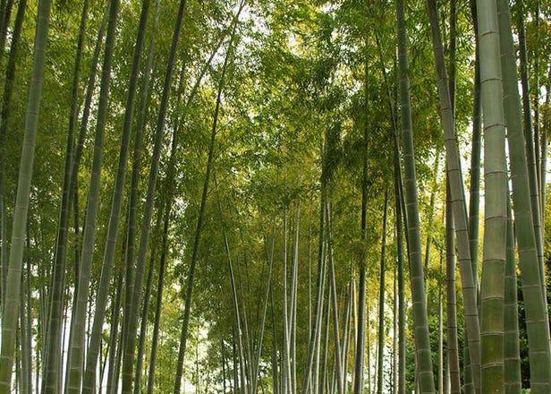 日本閒寂幽雅的5個庭園