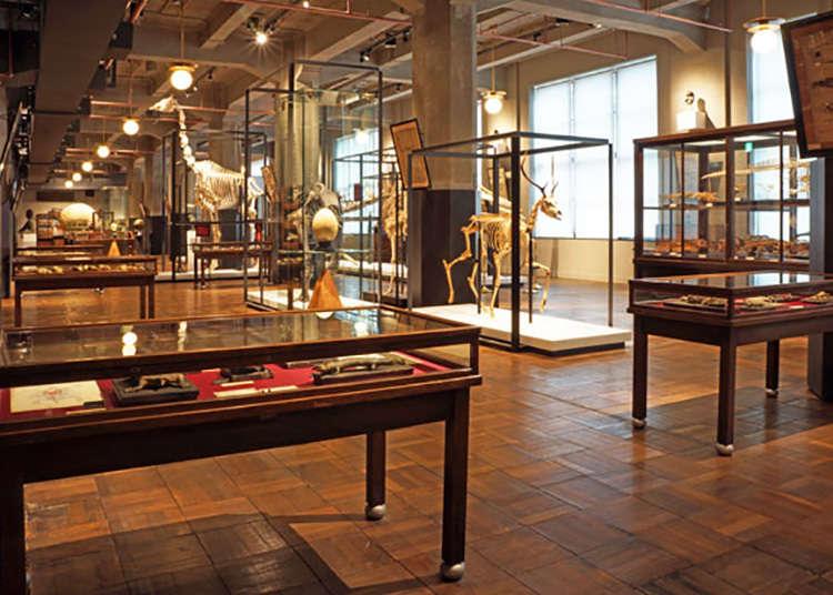 Tokyo: Koleksi Spesimen Langka dari Universitas Tokyo