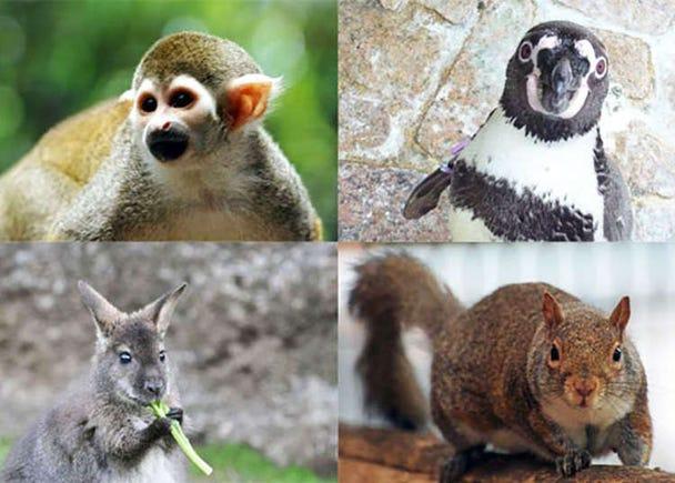 【西葛西】全時段免費入園的動物園