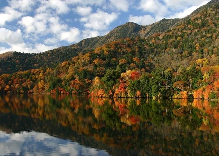 秋季最適合在湯之湖散步,欣賞紅葉的豔麗色彩