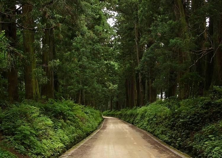 金氏世界紀錄認證的日光街道杉並木路