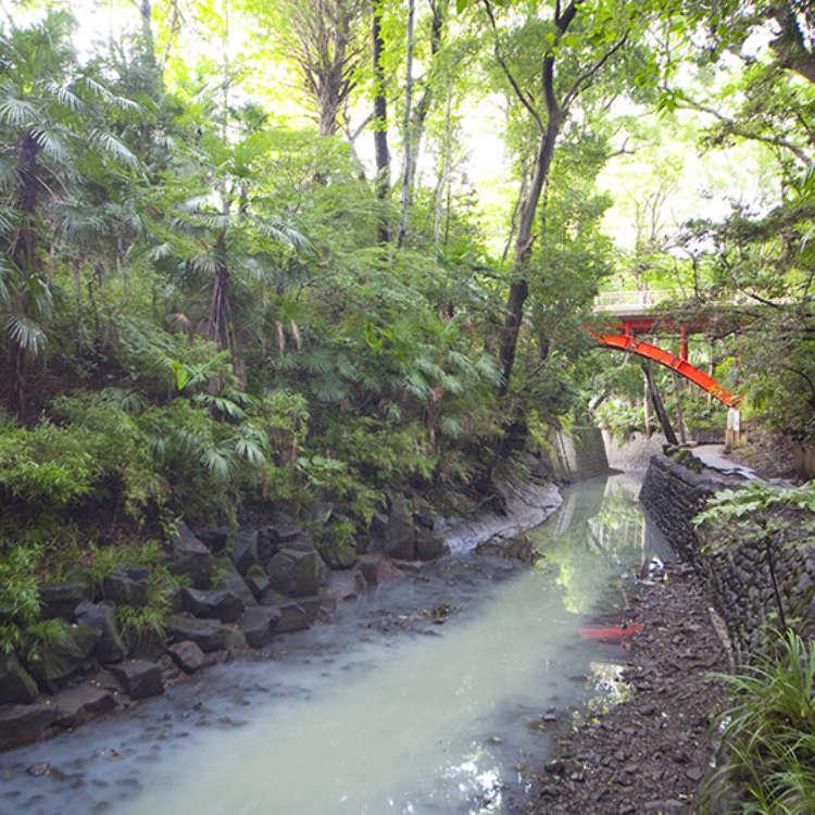 Explore Tokyo's Only Ravine - Full of Lush Greenery