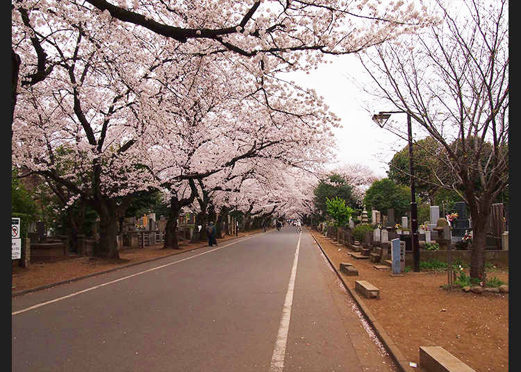 3. Learn about Japanese Graves by Walking in Yanaka Cemetery
