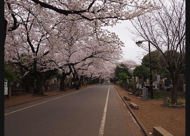 Berjalan di perkuburan Yanaka sambil mengetahui makam-makam Jepun