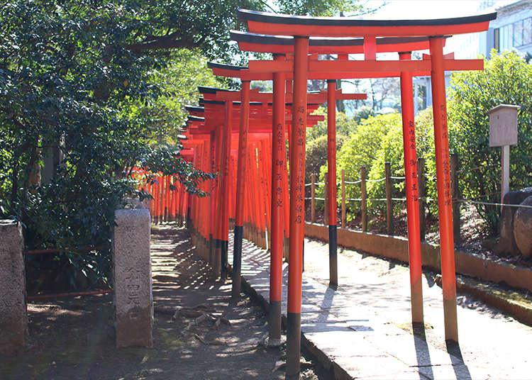 เดินวนรอบประตูโทริอิของเทพธิดาโอโตเมะอินาริที่ศาลเจ้าเนะซุ !