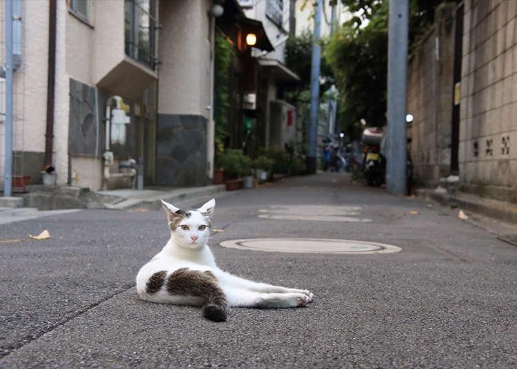 ถ่ายภาพแมวควบคู่ไปกับทิวทัศน์เมืองย้อนยุคที่เรียงกันเป็นแนวยาว