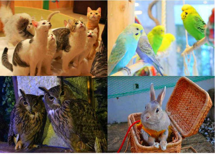 Enjoy Japan's Wild Side! Tokyo's Top 8 Animal Cafes
