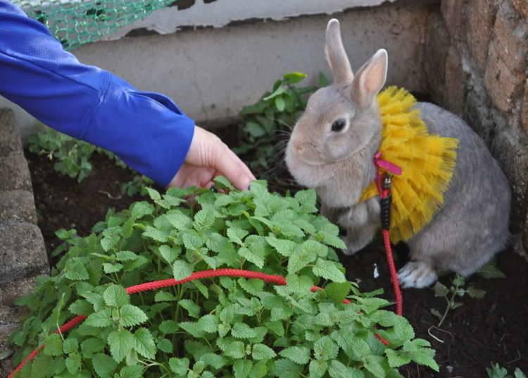 Bunny's Theme Park Hutch 浅草:浅草を眼下に屋上でウサギと遊ぼう!