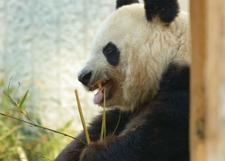 「上野動物園」的亮點不是只有動物!